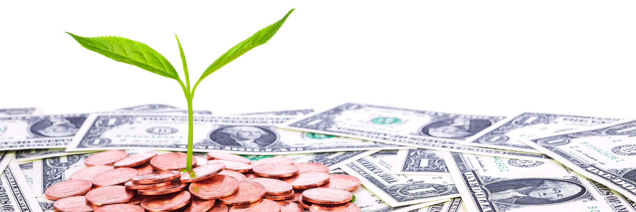 plant growth from money